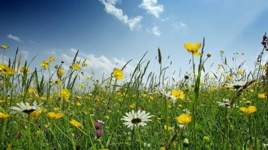 fiori-aiuola
